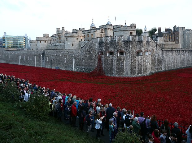 Tower London Poppies