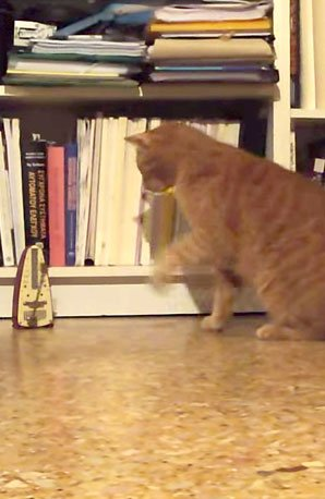 Cat v Metronome