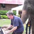 Peter the elephant plays piano